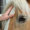 Horses Helping Humans – Therapeutic Centre