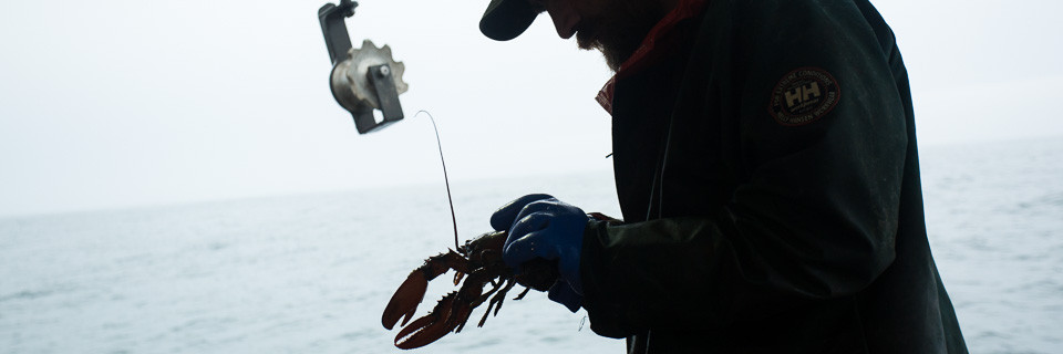 Portrait: Laurence Cook – Commercial Lobster Fisherman